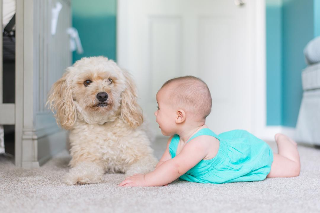 Kid and Pet Friendly Carpet an Upholstery Cleaning Boulder Co